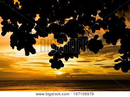 Evening and Sea Branches Overhanging
