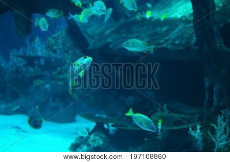 Little fish playing next to shipwreck - natural background