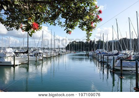 Summer at Doves Bay boat Marina Kerikeri Northland New Zealand NZ with pohutukawa tree and flowers