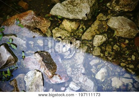 Tadpoles swim and hide in the mud and on the edge of a pond.