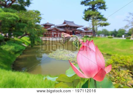Byodo-in Beautiful Japanese style temple in summer season and pink lotus in foreground. This is the very famous Tourist attraction in Uji city near Kyoto Japan.