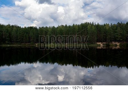 Photo of a pine forest on the shore of a calm lake