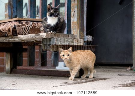 Photo of two stray cats living on the street