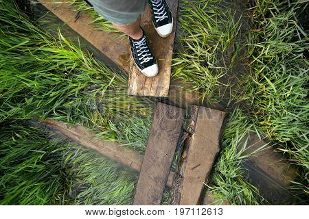 Photo of a grass in a swampy flooded area underfoot
