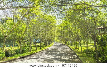 Twisty roads in the park with green trees shine in the golden sunshine of the summer in the ecotourism to attract tourists visiting the weekend.