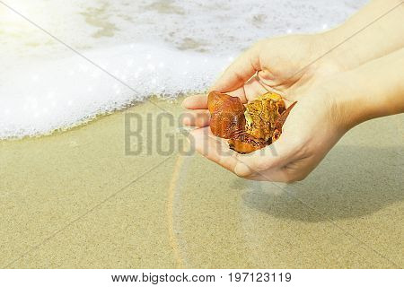 Amber in the hand with a bright reflection on the palm against the background of the sea. Bright glow of the sun stone in female hand. Mineral from resin yellow with insects inside against the sea.