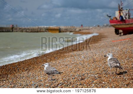 Close-up on seagulls with a beach launched fishing boat in the background, Hastings, UK