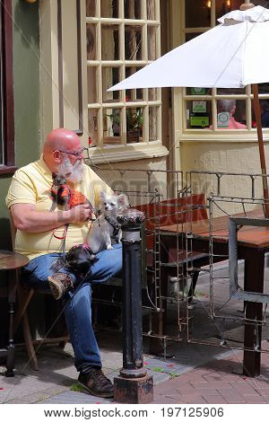 HASTINGS, UK - JULY 22, 2017: A man with a beard  sitting at a cafe in George Street with his three cute little dogs
