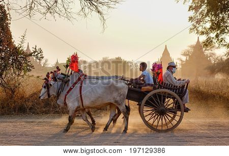 Ox Cart Running On Dusty Road At Sunset