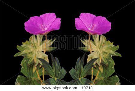 Pink Flower Mirror