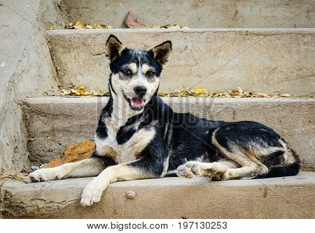 A dog sitting on stairs at the temple in Mandalay Myanmar.