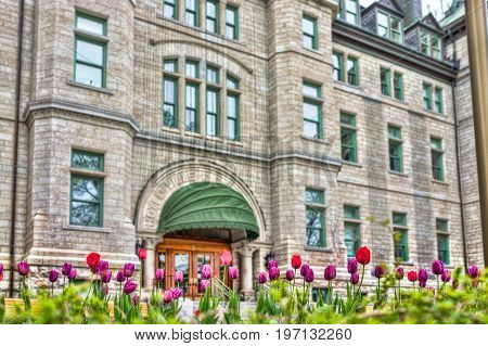 Quebec City, Canada - May 29, 2017: Closeup Of Purple And Red Tulips In Old Town With Hotel De Ville