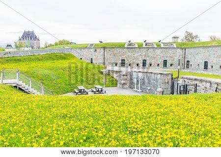 Quebec City, Canada - May 29, 2017: Macro Closeup Of Yellow Dandelion Flowers In Citadel
