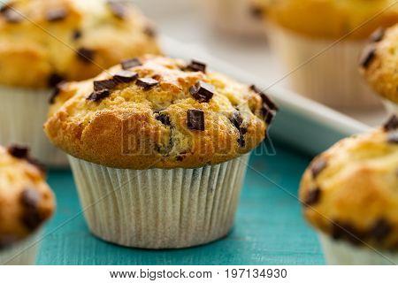 Many tasty homemade vanilla muffins with chocolate chunks on bright white background. Closeup.