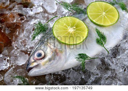 Frozen Fresh Trevally Fish.