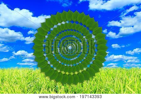 pattern fron green leaves on the meadow with green grass and cloudy sky
