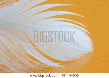 Fluffy white feather texture macro view. Luxury softness concept. Bird plumage feathering on yellow background. Shallow depth of field, soft focus