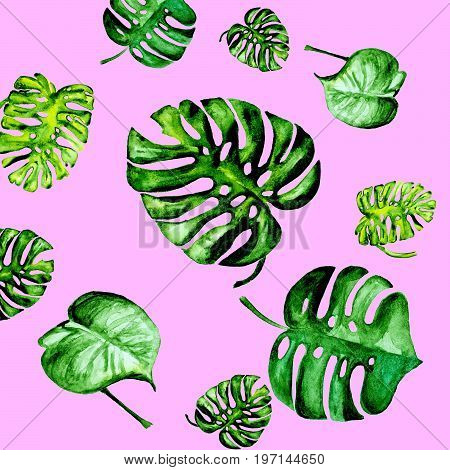 collage of watercolor monstera leafs on pink background