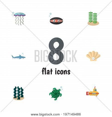 Flat Icon Nature Set Of Alga, Medusa, Tortoise And Other Vector Objects poster