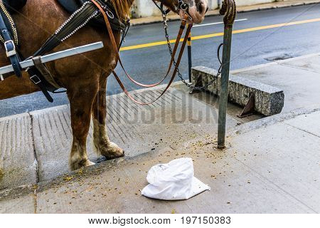 Quebec City, Canada - May 30, 2017: Horse Standing By Bag Of Food And Attached To Carriage Buggy For