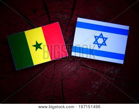 Senegal Flag With Israeli Flag On A Tree Stump Isolated