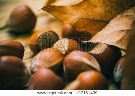 Scattered whole hazelnuts on weathered wood background dry autumn brown leaves fall mood cozy inspirational school time copy space