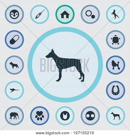 Elements Circle, Curly Puppy, Tortoise And Other Synonyms African, Dots And Pet.  Vector Illustration Set Of Simple Fauna Icons.