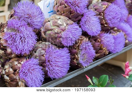 Colorful Artichoke Flowers For Sale At Local Street Market. Provence. France