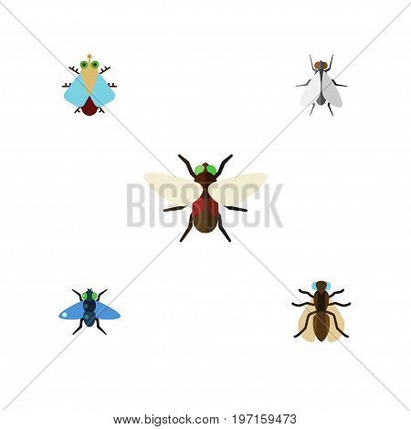 Flat Icon Fly Set Of Dung, Tiny, Bluebottle And Other Vector Objects