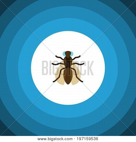 Mosquito Vector Element Can Be Used For Gnat, Mosquito, Hum Design Concept.  Isolated Gnat Flat Icon.