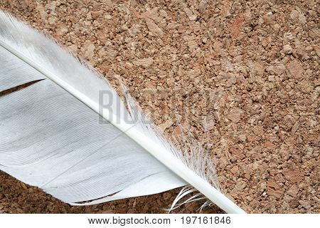 Closeup of bird feather on nice cork wooden background