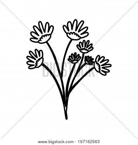 sketch contour of hand drawing daisy flower bouquet with several ramifications vector illustration
