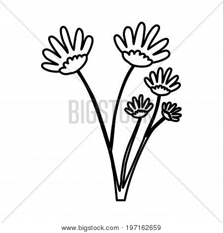 sketch contour of hand drawing daisy flower with several ramifications vector illustration