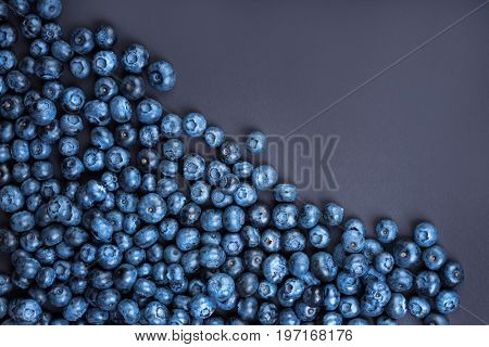 Close-up of delicious and juicy blueberries on a dark purple background. Top view of tasteful, raw and ripe blueberries full of vitamins. Organic ingredients for nutritious summer desserts.
