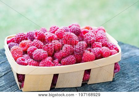 Side view of basket full of sweet ecologically grown raspberries on wooden textured stump. Close-up