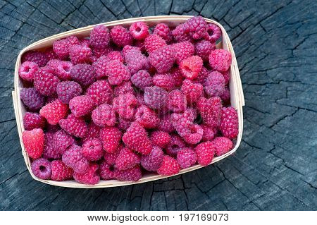 Top view of basket full of sweet ecologically grown raspberries. Close-up