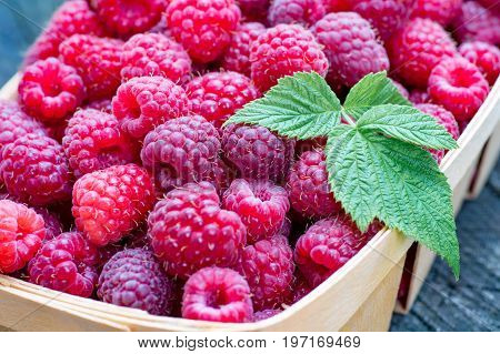 Close-up of big ripe raspberries in a wooden basket.