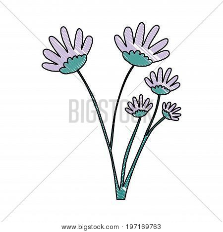 crayon silhouette of hand drawing lilac color daisy flower bouquet with several ramifications vector illustration