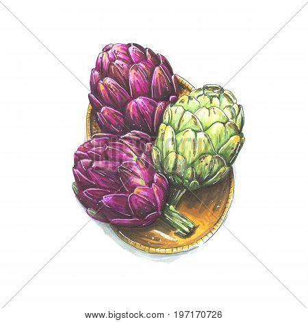 Handmade marker drawn illustration of artichoke. Botanical clip-art of artichoke. Isolated eco food illustration on white background. Fresh organic food