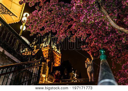 Quebec City, Canada - May 31, 2017: People Taking Pictures By Illuminated Crabapple Blossom Tree By