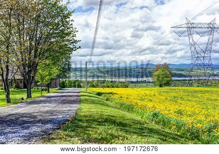 Ile D'orleans Landscape With Field Of Yellow Dandelion Flowers In Summer And Electric Power Lines