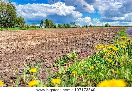 Ile D'orleans Landscape With Brown Field In Summer For Potatoes And Path Road Trail With Closeup Of