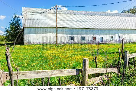 Large White Barn Building In Summer Landscape With Yellow Dandelion Flowers In Field Meadow