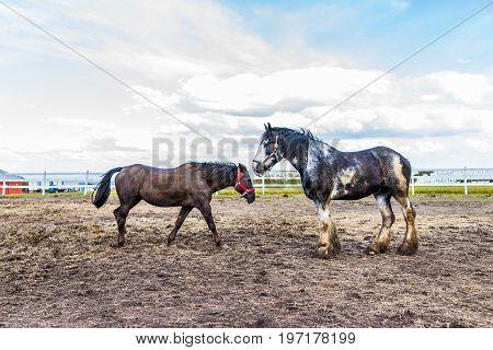 Two Horses Walking Towards Each Other In Farm Paddock In Brown Soil Landscape