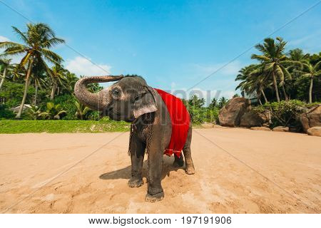 Happy and funny elephant covered in red cloak standing on the beach on palms trees background