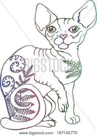 Vector illustration of a cat. Colorful portrait of a cat. Stylized Canadian Sphynx