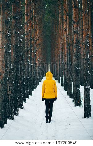 Road covered in snow, pine pine tree alley in winter time, man in yellow raincoat standing in the middle during snowfall. Natural geometry