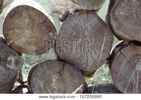 Pile Of Tree Stumps, Woods Structure. The Spears Of Huge Trees Are Stacked In A Sawmill. Light Backg