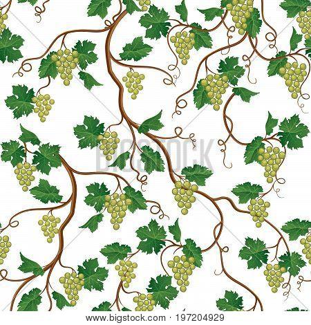 Floral pattern with grape branch. Wineyard seamless wallpaper. Garden background
