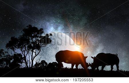Natural Safari landscape